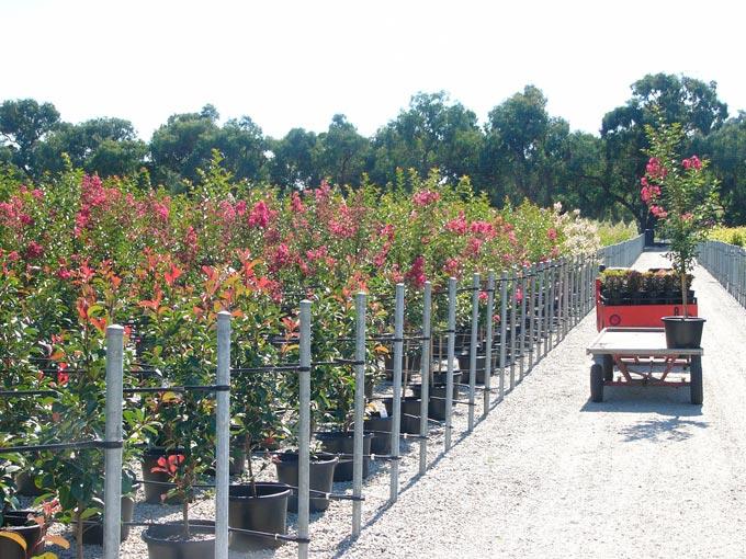 horticulture2